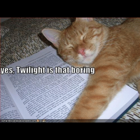 Feline review of twilight
